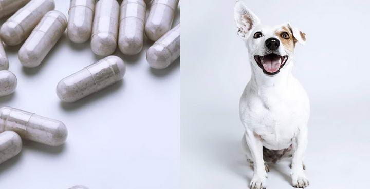 宠物猫咪和狗狗能够使用益生菌和益生元?