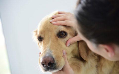 宠物猫咪和狗狗季节性过敏怎么办?