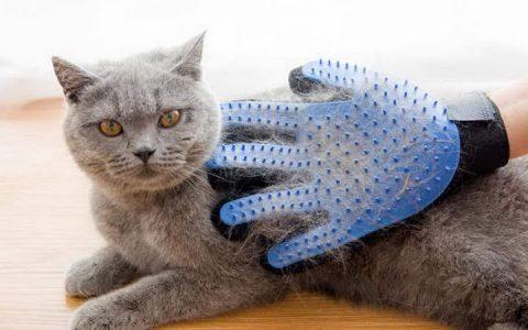 猫咪换毛季掉毛的原因和解决方法