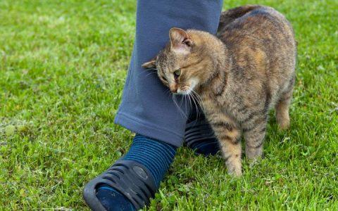 为什么猫咪在你走路的时候喜欢跑到你的脚下