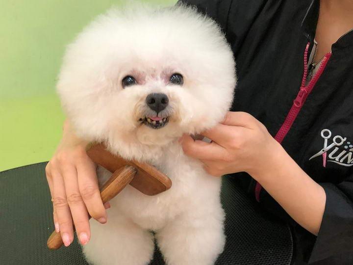 夏天教你如何正确的给狗狗剃毛剪毛