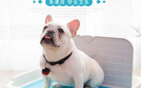 狗狗尿盆便盆厕所训练需掌握三大要点