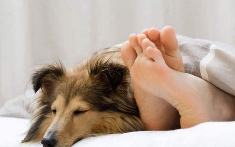 关于不能和狗狗睡一起的5个问题