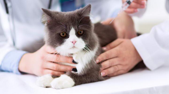 宠物狗或猫咪喝水太多!小心是糖尿病