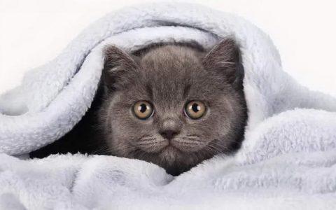 5种改善猫咪皮肤的方法