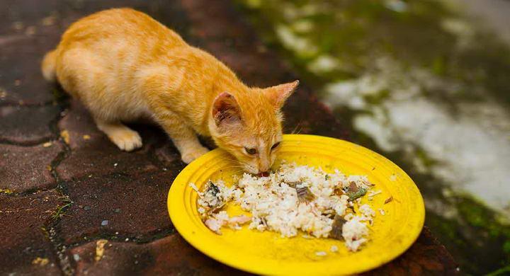 如何判断猫咪是否已经吃饱