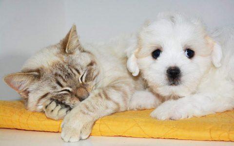让宠物猫咪和狗狗的粪便告诉你它们的健康状况