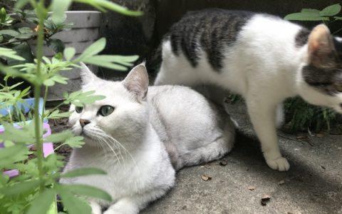 【网友分享】如何找到走丢的猫咪?