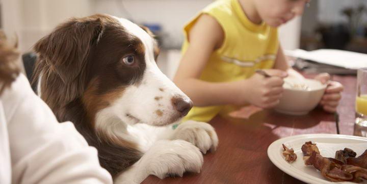 给宠物猫咪和狗狗吃生肉会不会激发它们的野性?