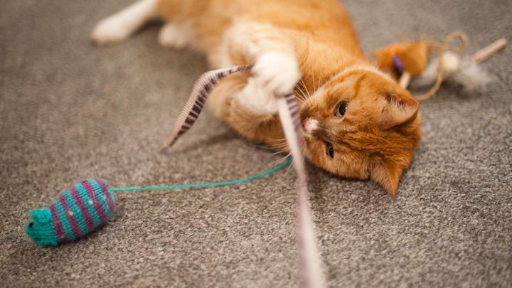 遵循天性让猫咪的玩耍更加轻松