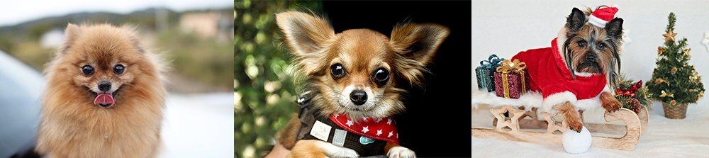 小型犬只依品种差别,有各自须留意的关节问题。