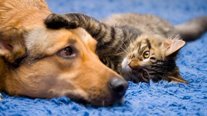 宠物猫咪和狗狗关节疾病的多发群体有哪些?