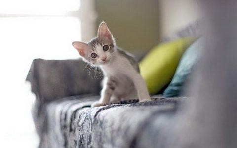 新手第一次养猫如何让猫咪放下戒心亲近我?