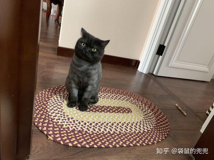 【网友分享】一年养猫的开销有多少?大约花费6000多元