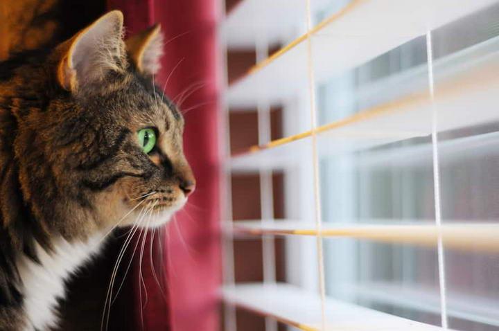 主人离家几天,猫咪是采用放任喂食、亲友不定期来照料还是送到宠物店寄养?