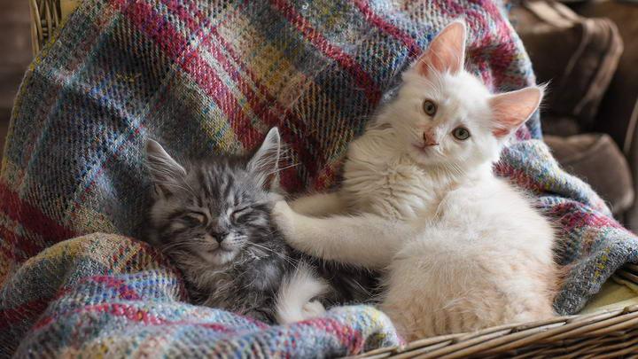 不常出门的家猫,要怎么让他们习惯接触其他同类?