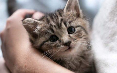 让猫咪寄养在别人家,你需要准备些什么?