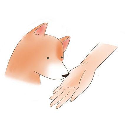 如何判断狗狗喜不喜欢你摸它?撸狗步骤