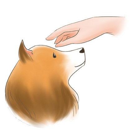 撸狗要谨慎:宠物犬不喜欢被摸的5个部位