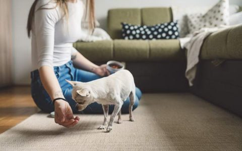 【跟狗狗玩游戏】你藏我找的寻宝游戏注意事项