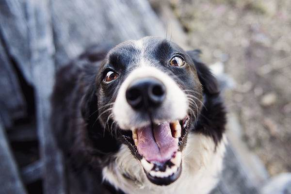 哪些原因容易造成狗狗的口腔问题?宠物犬牙齿问题症状