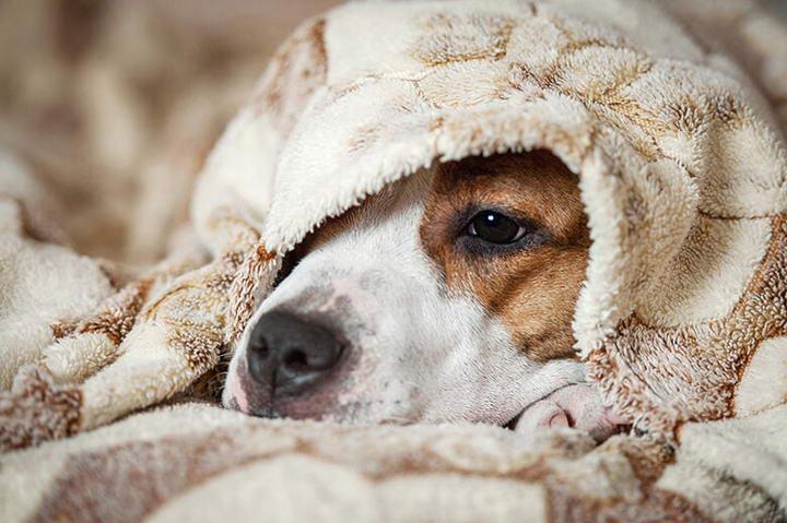 狗狗也会的感冒吗?宠物犬感冒症状和预防