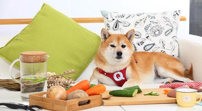 迈入高龄的猫咪和狗狗该如何调整饮食?老年宠物食得健康