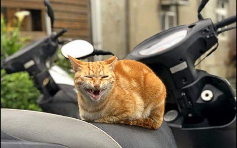 【猫叫声解读】猫咪哈气、低呜声、咯咯咯等叫声的含义