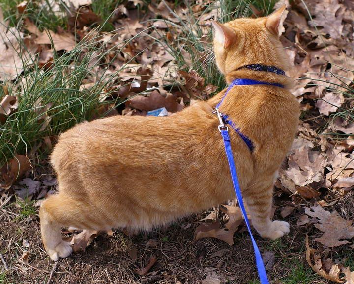 猫咪尾巴夹在两股之间,是因为它们恐惧焦虑,本能地保护它们脆弱的腹部、生殖器。