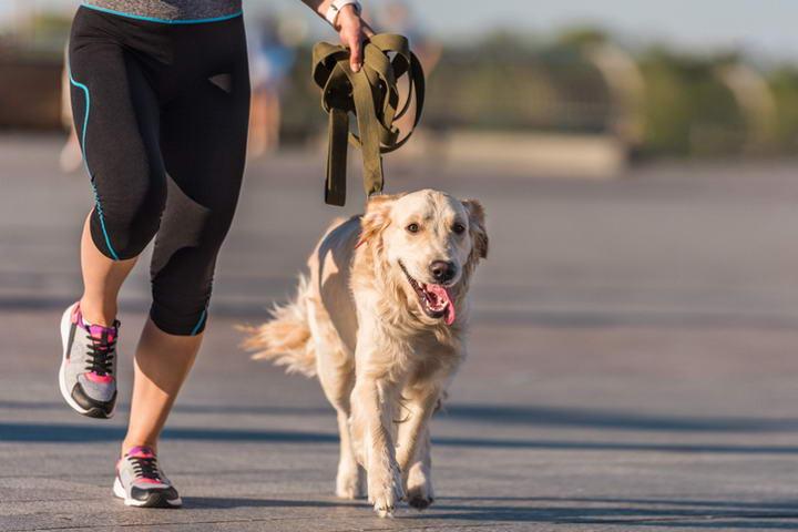 训练小狗常见的4种错误方式,幼犬错误训练