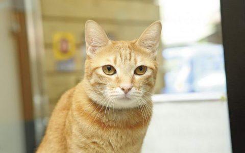 【猫眼睛动作解读】猫咪眨眼、瞳孔变化代表什么意思