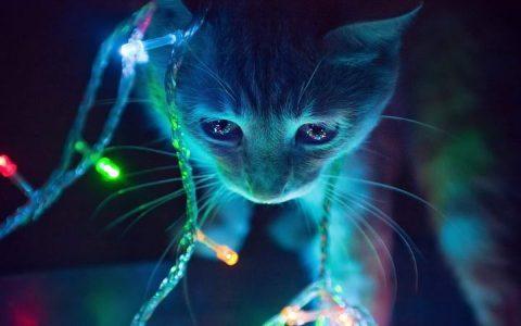 晚上要不要给宠物猫咪和狗狗留一盏小夜灯