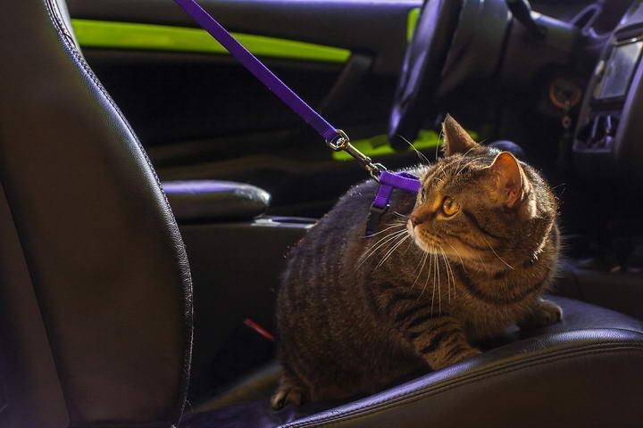 宠物猫咪和狗狗乘车长途旅行晕车怎么办?