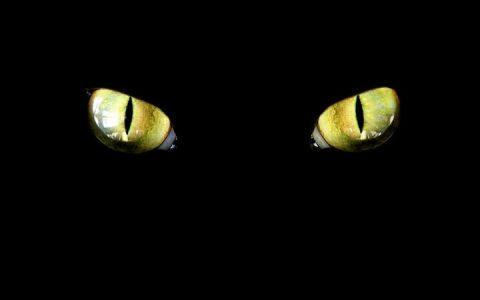 为什么猫咪狗狗半夜不睡觉?如何解决