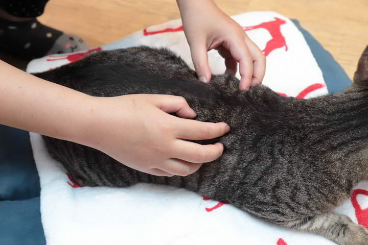 """利用指尖按摩的""""梳抚""""手法是毛小孩最能接受的按摩手法。"""