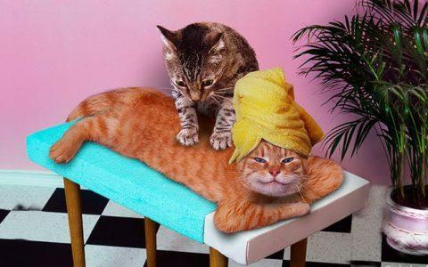 猫咪按摩:让猫咪彻底放松爱上你