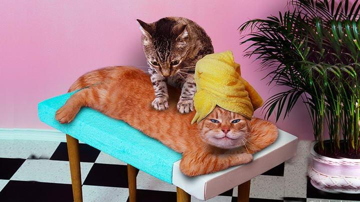 通过特定的抚摸方式来替猫主子按摩,不但能替它们舒压放松,还可拉近感情!