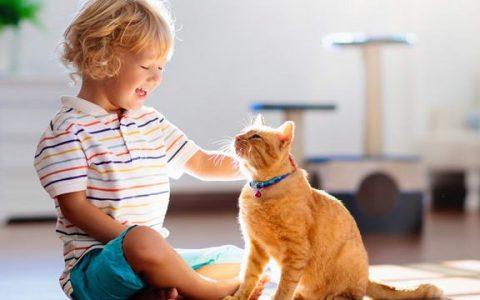 收养一只猫咪也许能够调节家庭中枯燥的生活
