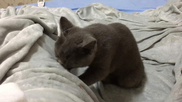 为什么猫咪看见窗外的小鸟会发出嘎嘎的奇怪叫声?
