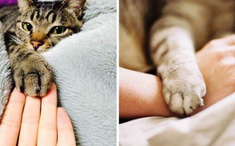 为什么猫咪一定要将它的手脚放在最上面