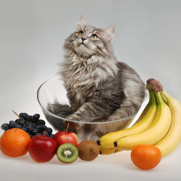 猫咪为什么喜欢吃奇异果?宠物猫能吃猕猴桃么