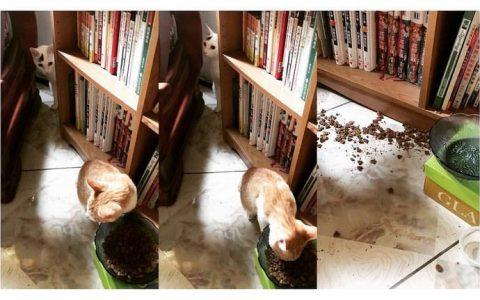 猫咪吃相太差如何纠正?