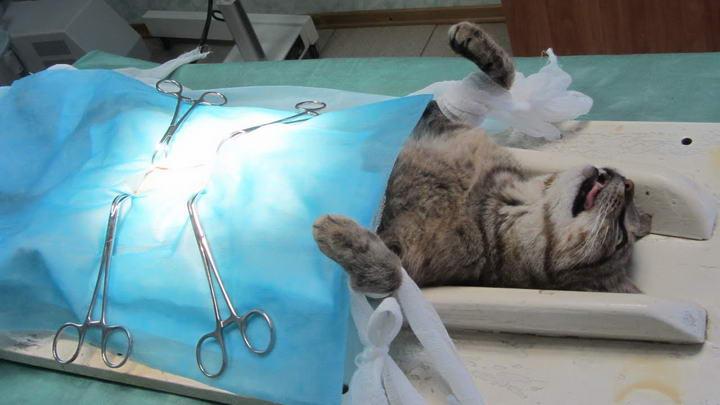 公猫绝育多少钱?猫咪绝育手术费用