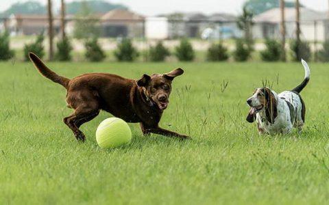 猫咪狗狗捡球,不是因为爱玩球?