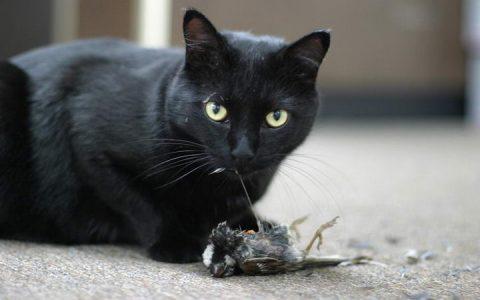 不要再送我蟑螂了:为什么宠物猫狗喜欢抓小动物给你