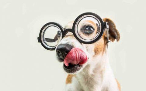 猫咪狗狗会记得自己的名字吗?