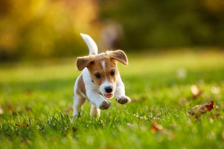 夏日宠物猫咪和狗狗防护大作战