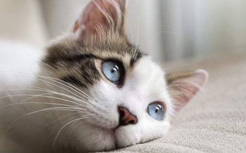 猫咪的胡须/触须不能随便剪