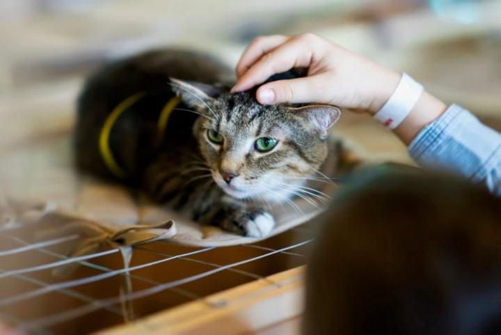 猫下泌尿道疾病的预防与治疗