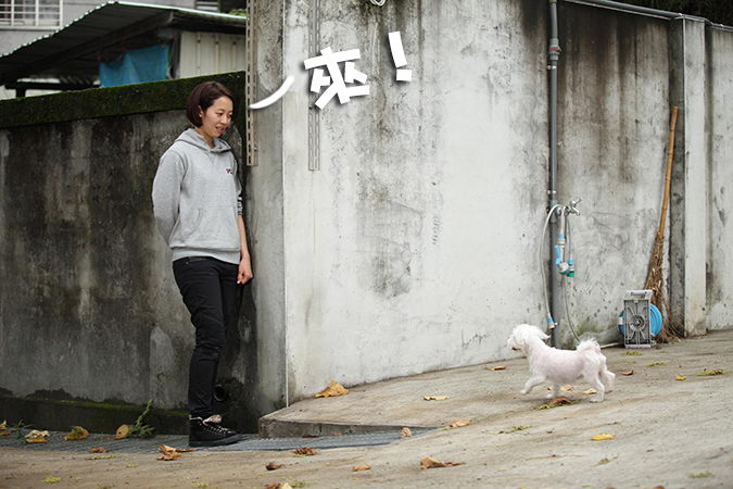 【狗狗训练教程】如何让狗狗听懂你召唤的命令